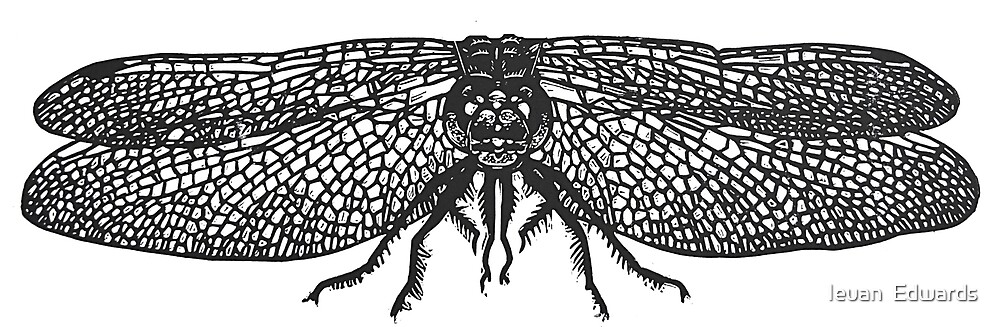 Dragonfly linocut by Ieuan  Edwards