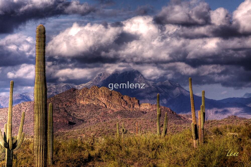 Four Peaks Desert by George Lenz