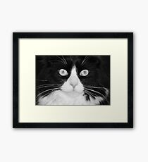 Jasper the Tuxedo Cat Framed Print