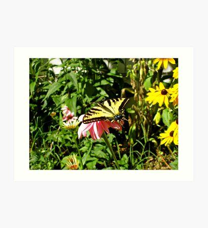 Butterfly World Art Print
