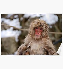 Snow monkey in Japan Poster