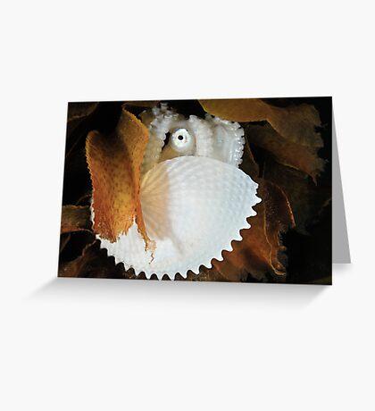 Paper Nautilus Greeting Card