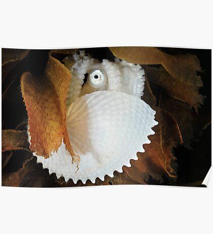 Paper Nautilus Poster