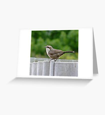 White - Browed Babbler Greeting Card