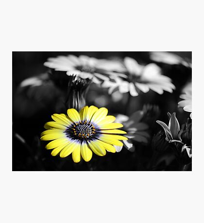 Simply Yellow Photographic Print