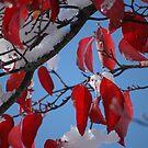 Scarlet Snow #2 by christiane