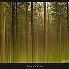 Autumn Woodland by AdornmentPhotog