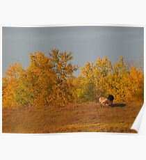 Autumn in the Pasture Poster