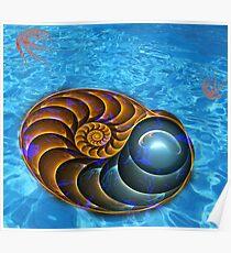 Ammonite (Nautilus) Poster