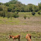 New Forest ponies by Andrew Duke