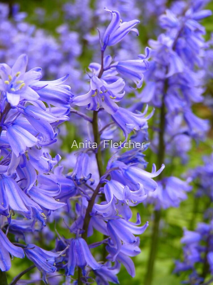 u0026quot  u0026quot english bluebell u0026quot   hyacinthoides  scilla nutans  u0026quot  by anita fletcher