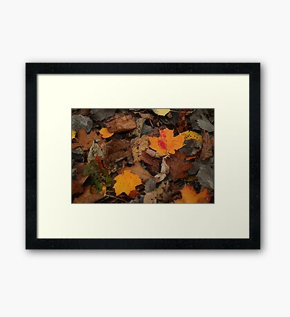 The Heart of the Leaf Grows Red Framed Print