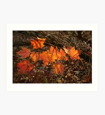 The Transparency of Fall Art Print