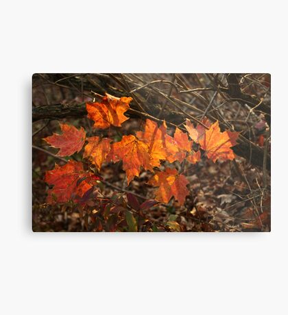 The Transparency of Fall Metal Print