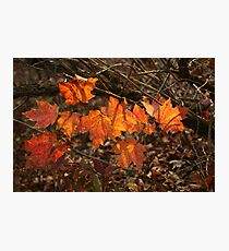 The Transparency of Fall Photographic Print