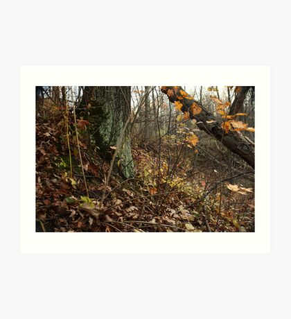 A Sloping Forest Scene Art Print