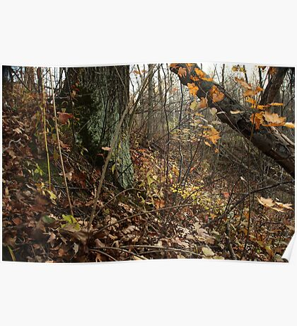 A Sloping Forest Scene Poster