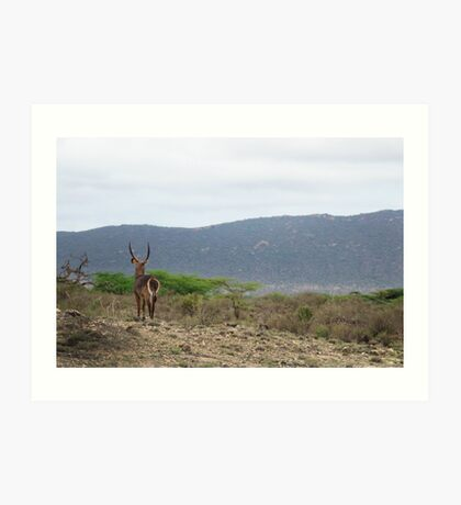 The Watcher - Waterbuck  Art Print