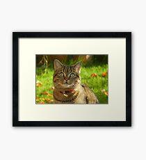 Autumn sunshine on Boris Framed Print