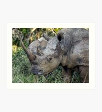 Now That Is A HORN ! Art Print