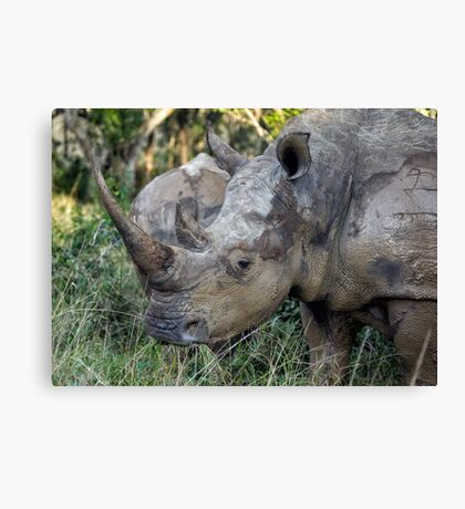 Now That Is A HORN ! Canvas Print