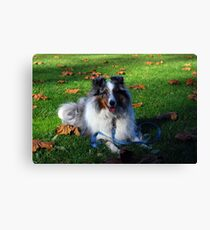 Field Of Leaves Canvas Print