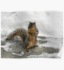 Brrrrrrr Have you seen my mittens?  Poster