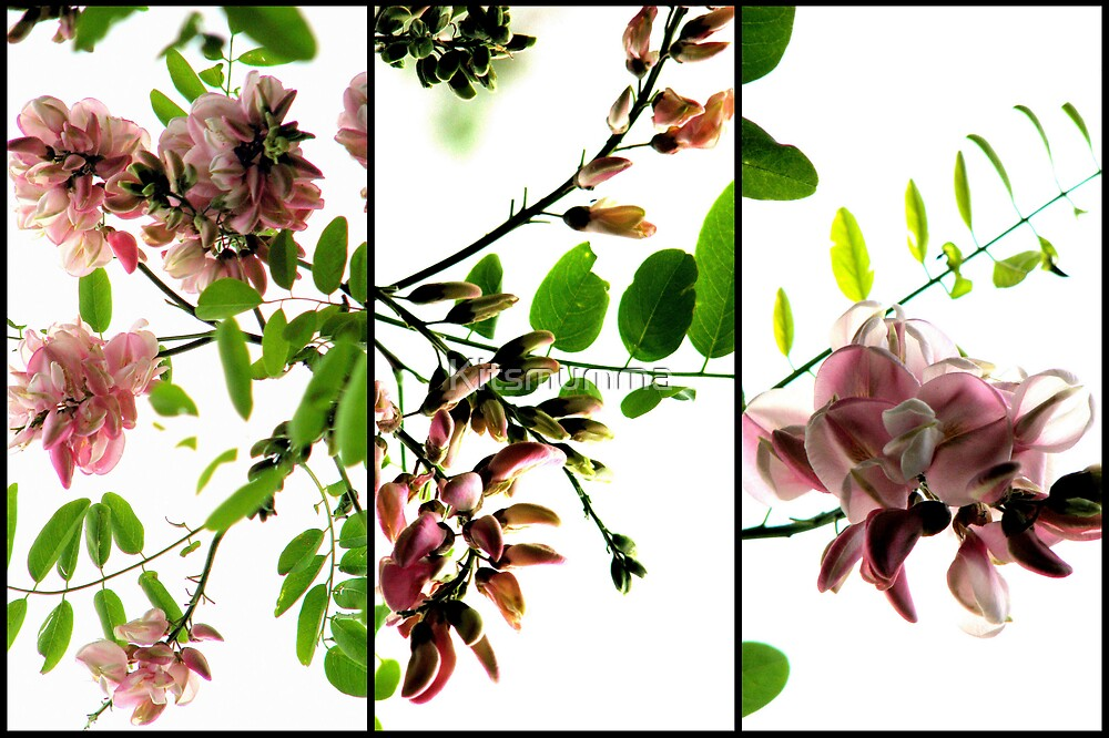 Robinia - Triptych by Kitsmumma
