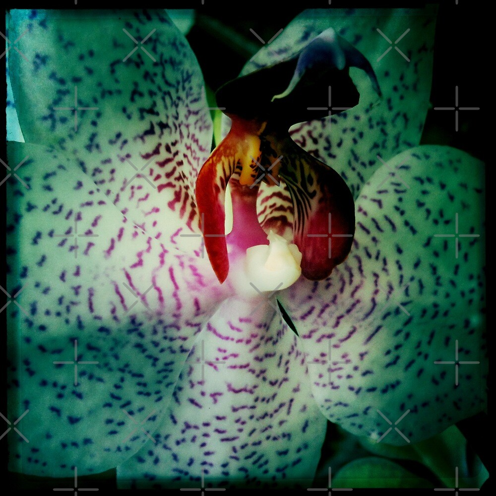 iPhone ~ Orchid 2 by TeAnne