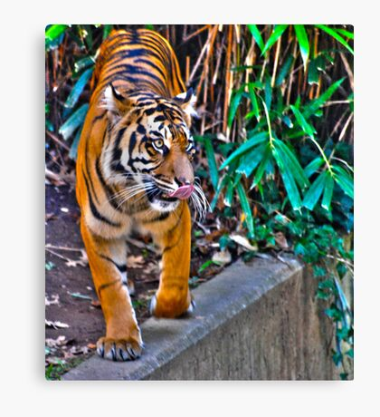 Is it time for lunch? Canvas Print