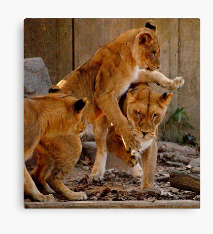 Playful Cubs Canvas Print