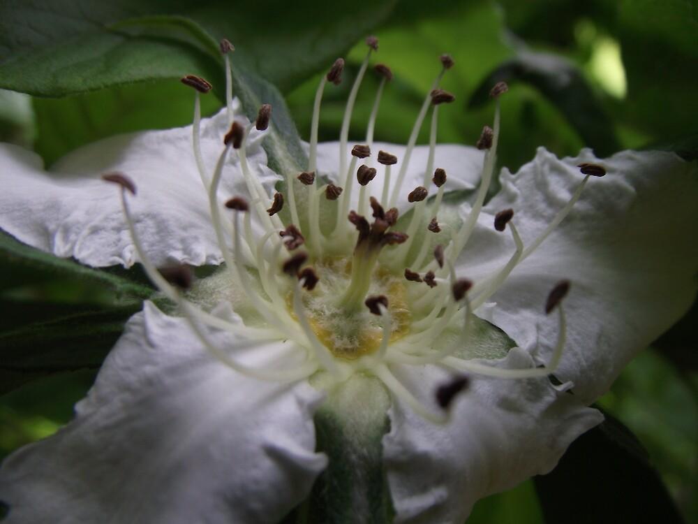 spring macro flower blossoms by gaylene