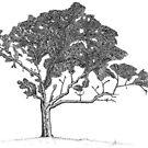 Mighty Oak Tree by Matt Simner