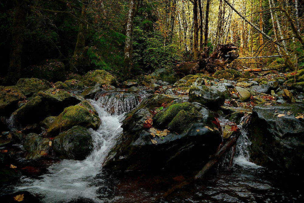 Gold Is Where You Find It by Charles & Patricia   Harkins ~ Picture Oregon
