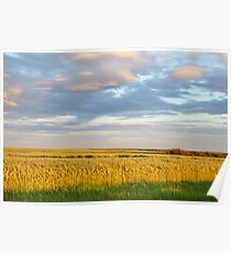 Wheat Field - Grande Prairie, Alberta Poster