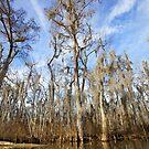 The Bayou - Louisiana  by mattnnat