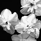 White on Black by © Joe  Beasley IPA