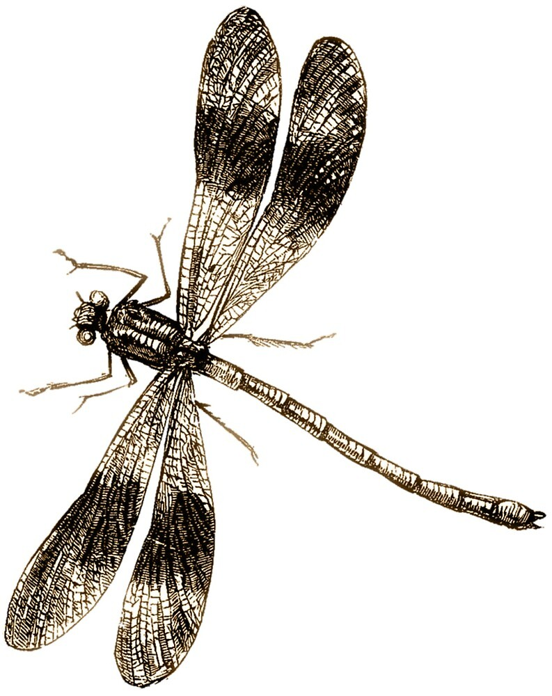 Dragonfly drawing by mosfunky