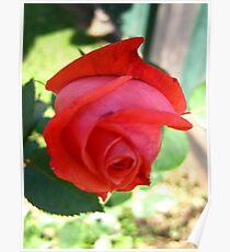 November Rose 3 Poster