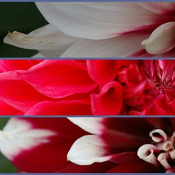 French pink and red flowers composition by mariettesar