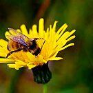 Bumblebee by Jessica Chirino Karran