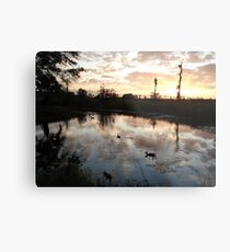 SUNSET WITH MUSCOVIES (ECONFINA CREEK, FL) Metal Print
