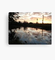 SUNSET WITH MUSCOVIES (ECONFINA CREEK, FL) Canvas Print