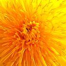 Yellow by Reg1