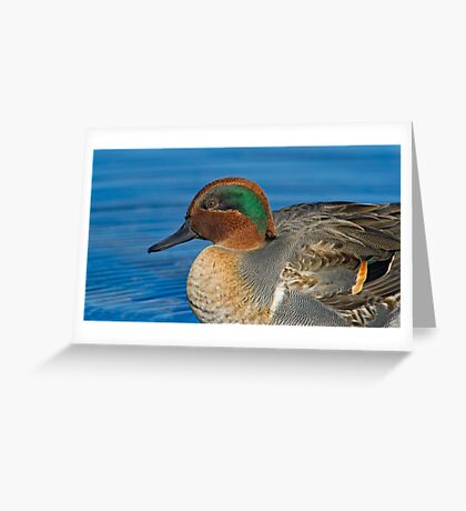 Green winged teal profile  Greeting Card