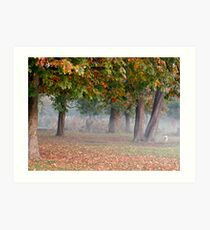 Freddie in a misty park Art Print