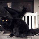 Marley ready for Halloween by David Owens