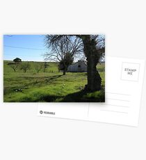 Spooky Tree (Bunk House) Postcards