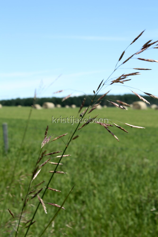 Prairie Grasses by kristijacobsen