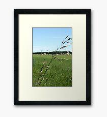 Prairie Grasses Framed Print